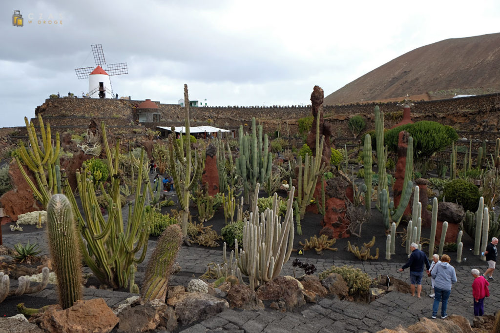 Jardin de Cactus - popularna atrakcja Lanzarote