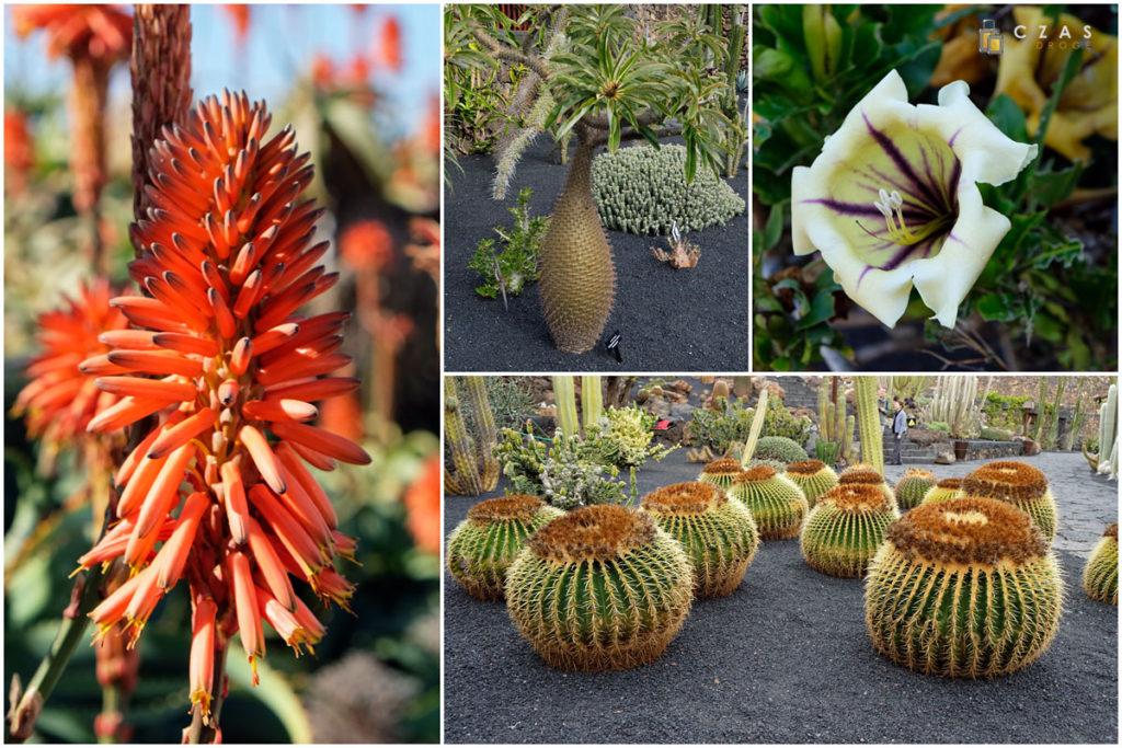 Przykłady Lanzarotańskiej flory ;)