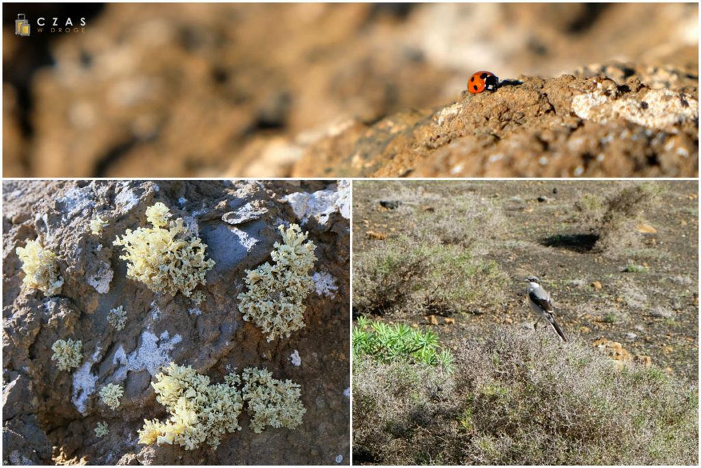 Na niegościnnych, wulkanicznych terenach znajdziemy wiele oznak życia :)