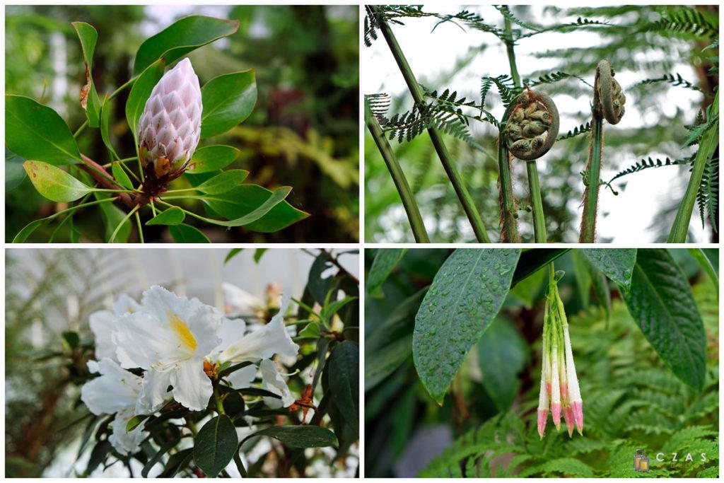 Kilka okazów rosnącyh w ogrodach botanicznych