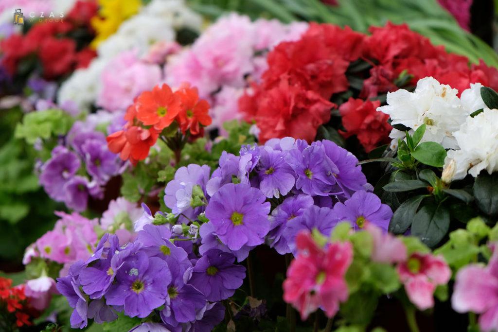 Kwiaty aż prosiły się o fotografowanie ;)