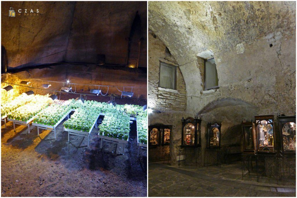 Podziemny ogród / Wystawa w trakcie spaceru po powierzchni