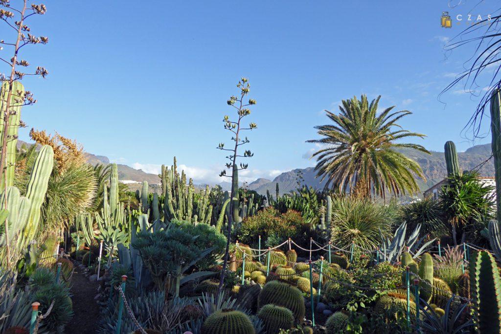 Ogród kaktusów przy restauracji La Ganana