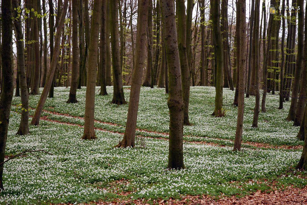Kwitnące kwiaty w lesie otaczającym zamek Granitz