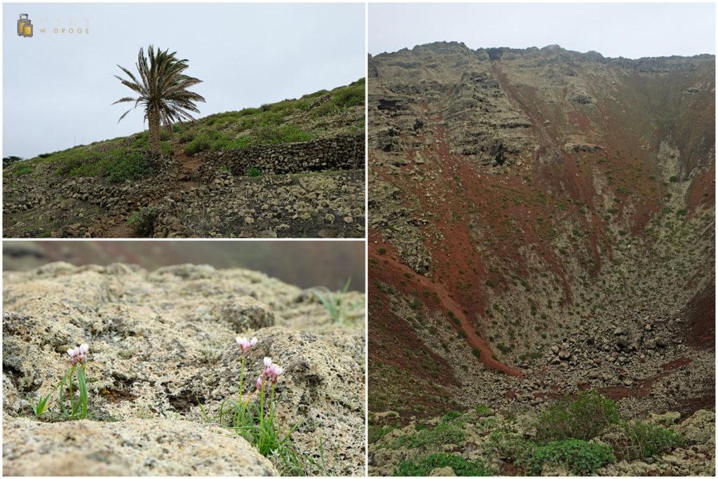 Charakterystyczna palma / Lokalna roślinność / Wnętrze La Corona