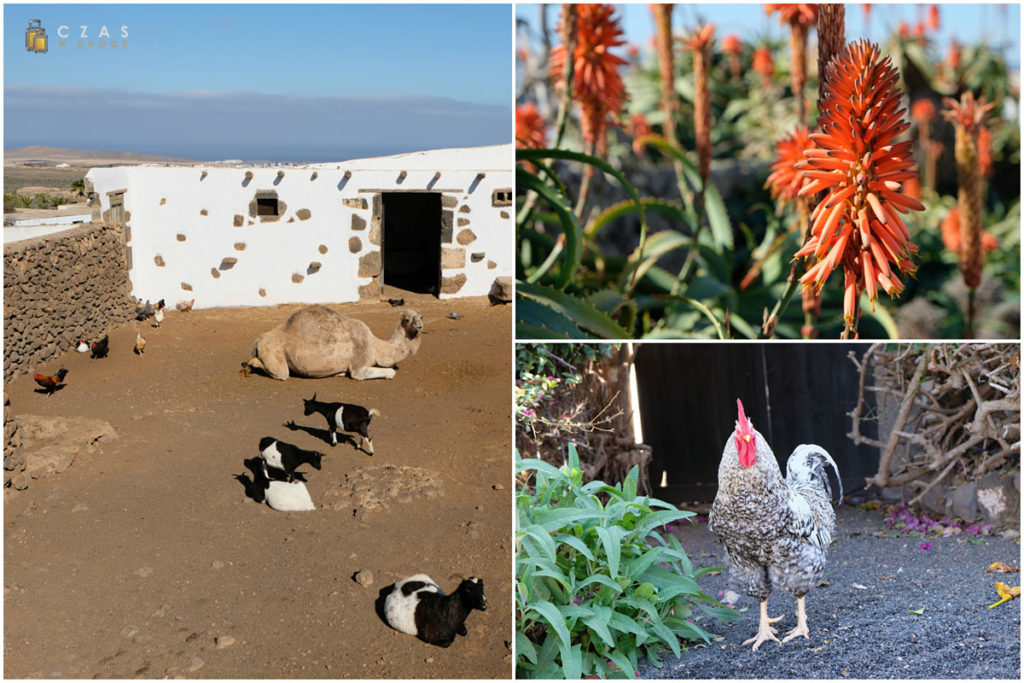Gospodarska fauna i flora ;)
