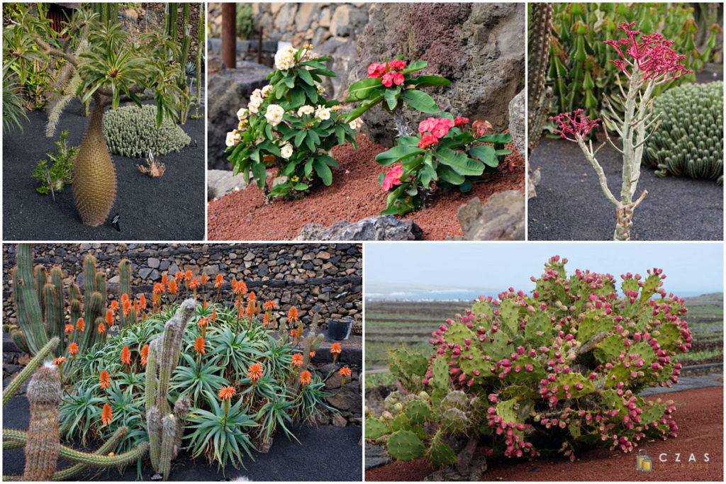 Jardin de Cactus - przykłady różnorodnej flory