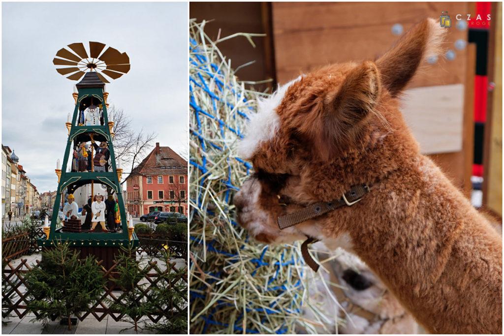 Dekoracje na Kornmarkt / Alpaka :)
